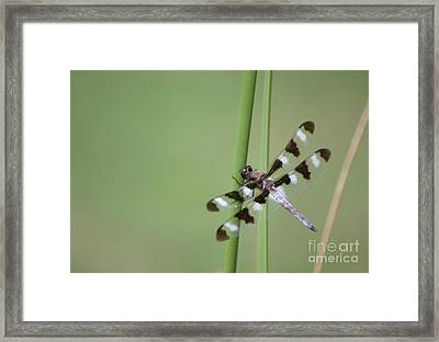 Hang On Framed Print by Living Color Photography Lorraine Lynch