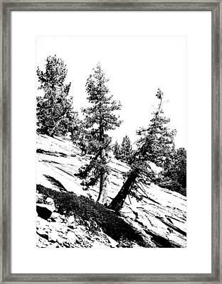 Hanging On Framed Print by Bonnie Bruno