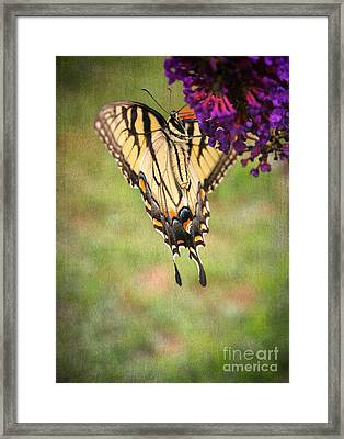 Hanging On Framed Print by Darren Fisher