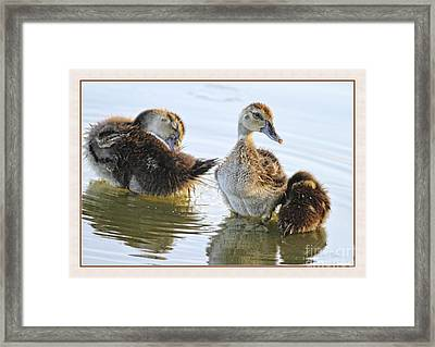 Hanging With The Buds Framed Print by Deborah Benoit