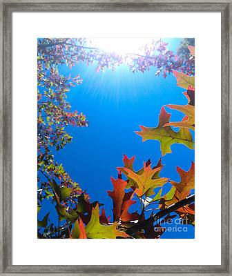 Happy Autumn Framed Print by CML Brown