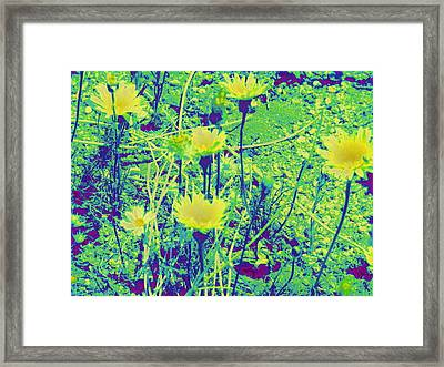 Happy Desert Daisies Framed Print by Claire Plowman