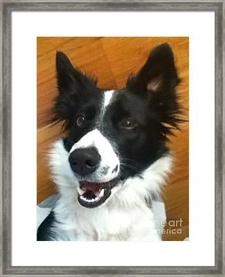 Happy Dog Framed Print by Nicole Bibbens