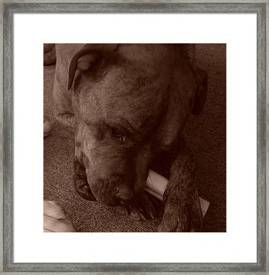 Happy Dog Framed Print by Rachel Snell