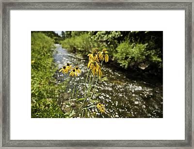 Happy Flowers Framed Print by Melany Sarafis