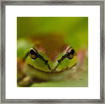 Happy Frog Framed Print by Mitch Shindelbower