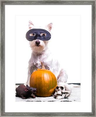 Happy Halloween Dog Framed Print by Edward Fielding