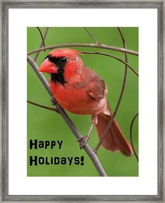 Happy Holidays  Framed Print by Dan McManus