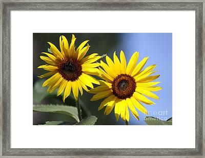 Happy Sunflowers Framed Print by Mrsroadrunner Photography