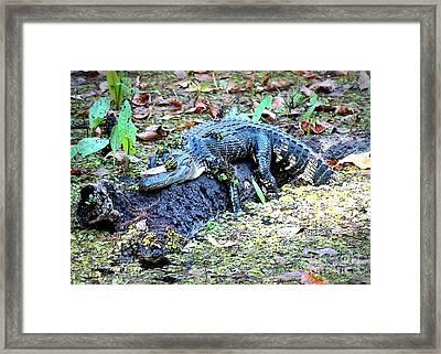 Hard Day In The Swamp - Digital Art Framed Print by Carol Groenen