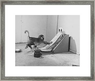 Harlow Monkey Experiment Framed Print by Science Source