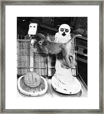 Harlows Monkey Experiment Framed Print by Photo Researchers, Inc.