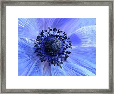 Harmony Blue Framed Print by Mim Eisenberg