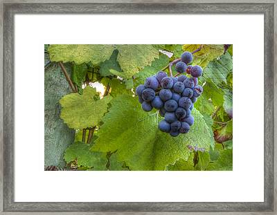 Harvest Ready Framed Print by Jean Noren
