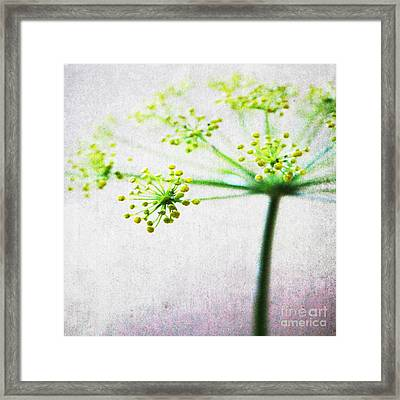 Harvest Starburst 2 Framed Print by Linda Woods