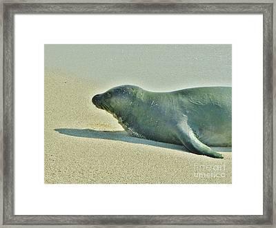 Hawaiian Monk Seal Framed Print by Craig Wood