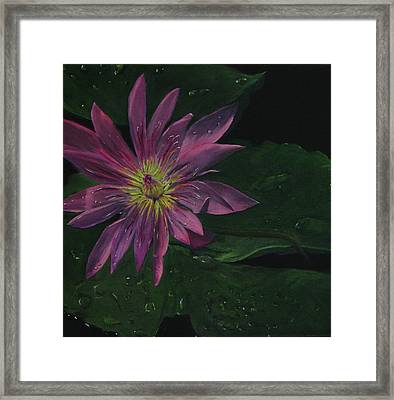 Hawaiian Water Lily - Pink Framed Print by Sherry Robinson
