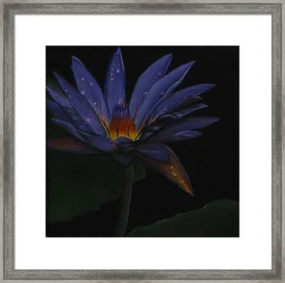 Hawaiian Water Lily - Purple Framed Print by Sherry Robinson