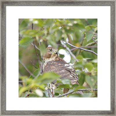 Hawk 9727-1 Framed Print by Robert E Alter Reflections of Infinity