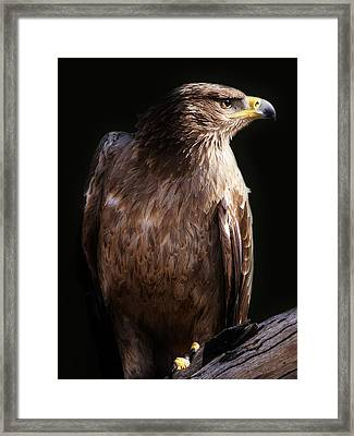Hawk Framed Print by Paulette Thomas