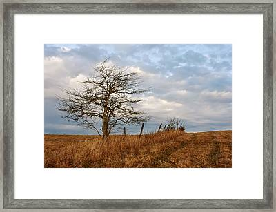 Hawthorne Tree And Hedgerow At Big Yellow Mountain Framed Print by Keith Clontz