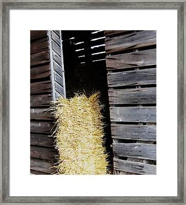Hay-day Framed Print by Todd Sherlock