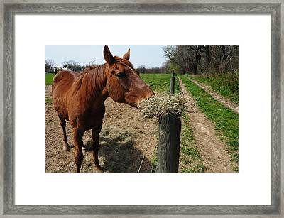 Hay Is For Horses Framed Print by Bill Cannon