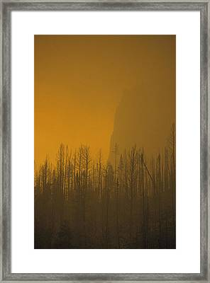 Haze Obscures Charred Pines Framed Print by Michael S. Quinton