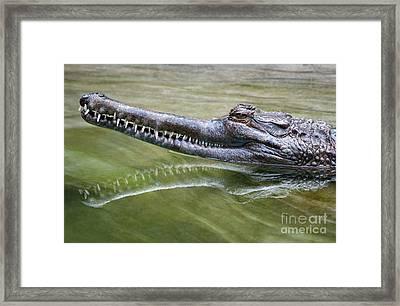 Head Above Water Framed Print by Dan Holm