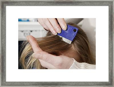 Head Lice Combing Framed Print by Michael Donne