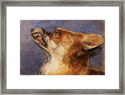 Head Of A Fox Framed Print by John Frederick Lewis