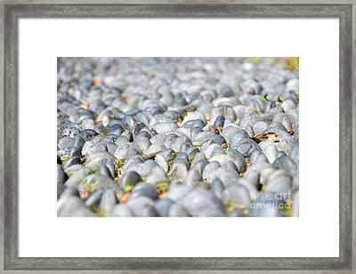 Healing Garden Framed Print by Ivy Ho