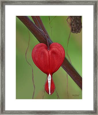 Heart To Heart Framed Print by Torie Tiffany