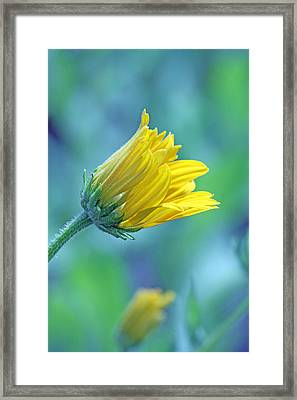 Hello World Framed Print by Becky Lodes