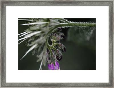 Herb Garden Abstract Framed Print by Scott Hovind