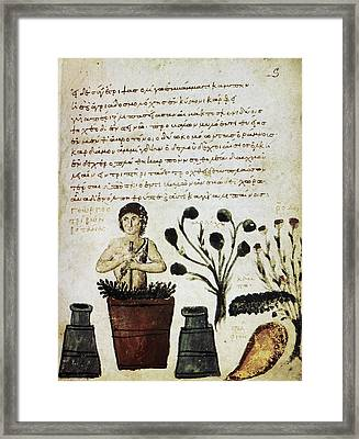 Herbal Medicine, 10th Century Framed Print by