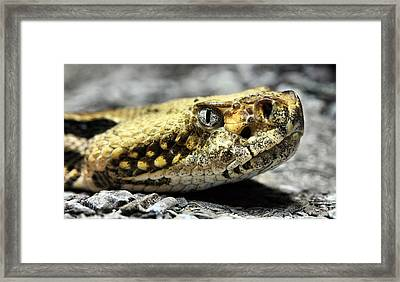 Here Kitty Kitty  Framed Print by JC Findley