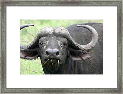 Here's Looking At You Framed Print by Deborah Hall Barry