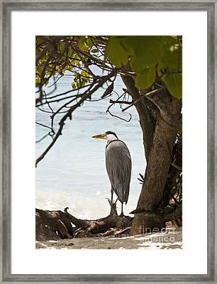 Heron Framed Print by Jane Rix