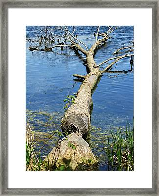 Herrick Lake Framed Print by Todd Sherlock