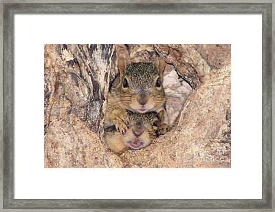 Hey I Cant See Framed Print by Lori Tordsen
