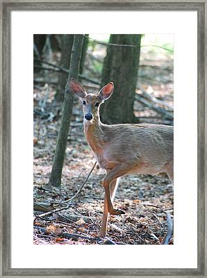 Hi There Framed Print by Michael Peychich