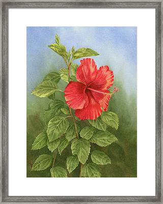 Hibiscus Framed Print by Leona Jones