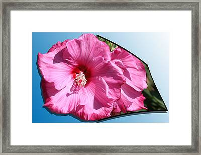 Hibiscus Framed Print by Shane Bechler