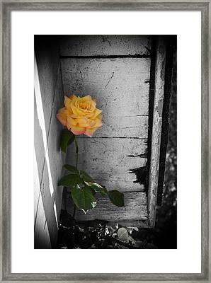 Hidden Color Framed Print by Wayne Stacy