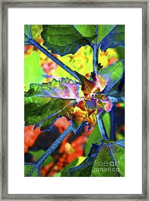 Hidden In Color Framed Print by Gwyn Newcombe