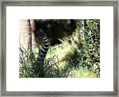 Hiding In The Brush Framed Print by Dee  Savage