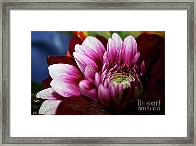 Highlights Framed Print by Susan Herber