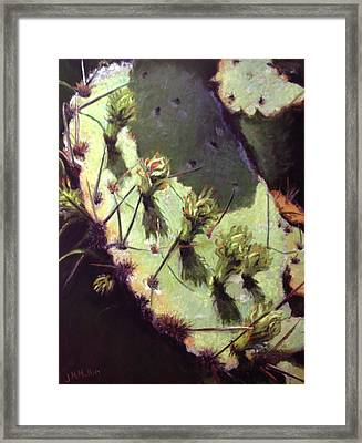 Hill Country Cactus Framed Print by Jacquie McMullen