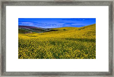 Hills Of Canola Framed Print by David Patterson
